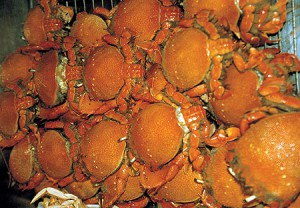 Кальмары, крабы и креветки