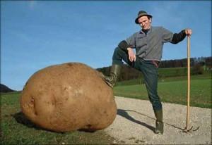 вред и польза от картофеля